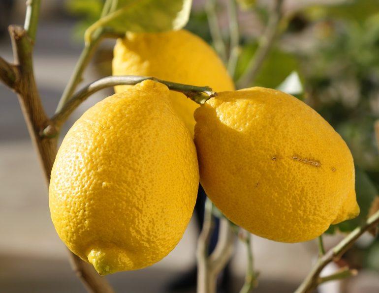 Лимонное дерево (Citrus limon) Киевский