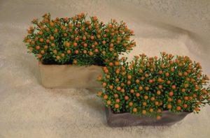 Нертера (Nertera) цветение