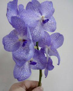 Орхидея Ванда - уход в домашних условиях